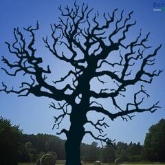 Silhouette eines Baumes